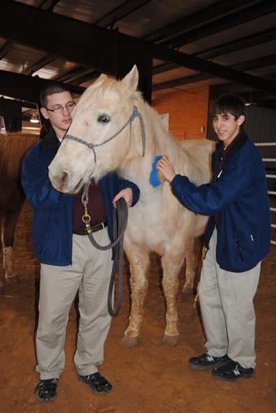 Two boys & Horse